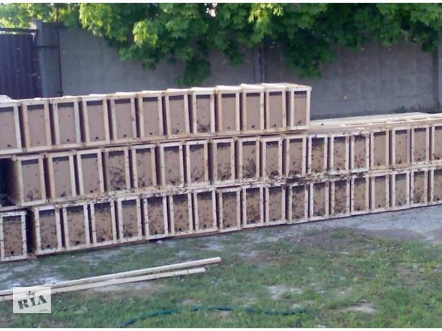 бу Продаются пчелопакеты,семьи Карпатской породы,матки в Харькове