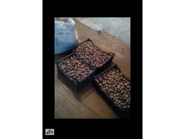 Грецкий орех, урожай 2019 года- объявление о продаже  в Чернигове