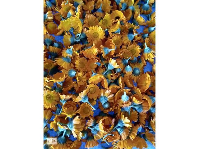Календула - ноготки сухая цветок корзинка- объявление о продаже  в Днепре (Днепропетровск)