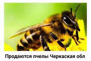 Мед из разнотравья лучше, чем другие сорта, защищает организм от инфекционных заболеваний и простуды.