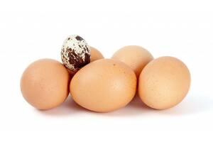 Продаем куриные яйца С0, ТМ Городня, ТМ Крупец,