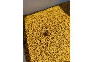Пыльца цветочная 1 кг сбор 2020