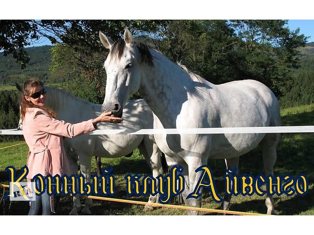 продам Прокат лошадей,верховая езда Одесса бу в Одессе
