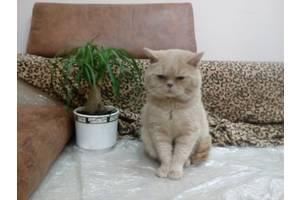 Вязка