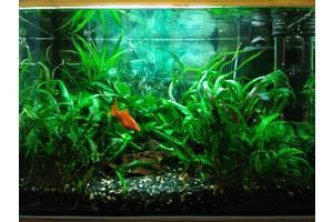 Недорого обслуживание пресноводного аквариума