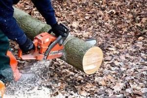 Обрізка дерев Херсон