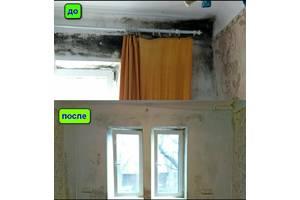 Уничтожение плесени, грибка в помещениях и автомобилях