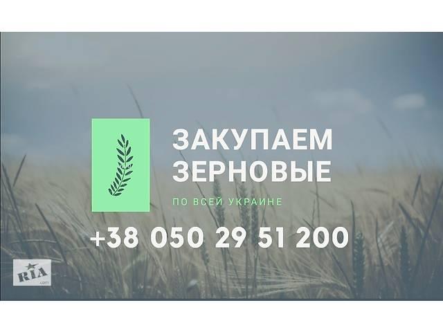 продам Закупаем зерновые по всей Украине бу  в Украине