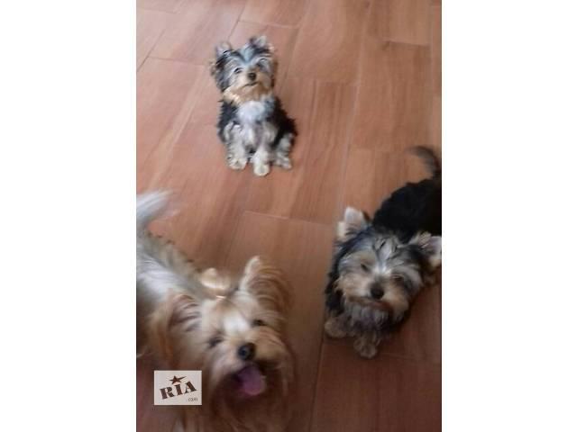 Собаки, щенки- объявление о продаже  в Сумах