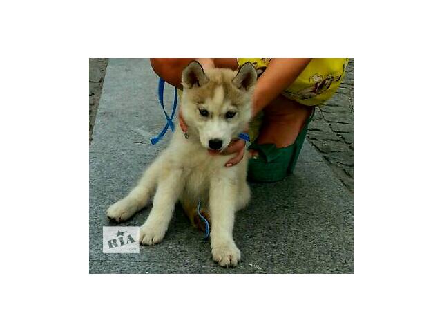 купить бу Собаки, щенки в Днепре (Днепропетровск)