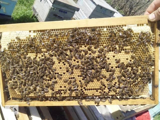 Соевая мука для подкормки пчел