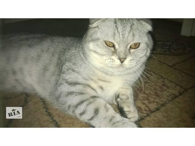 купить бу срочно продам котика в Житомире