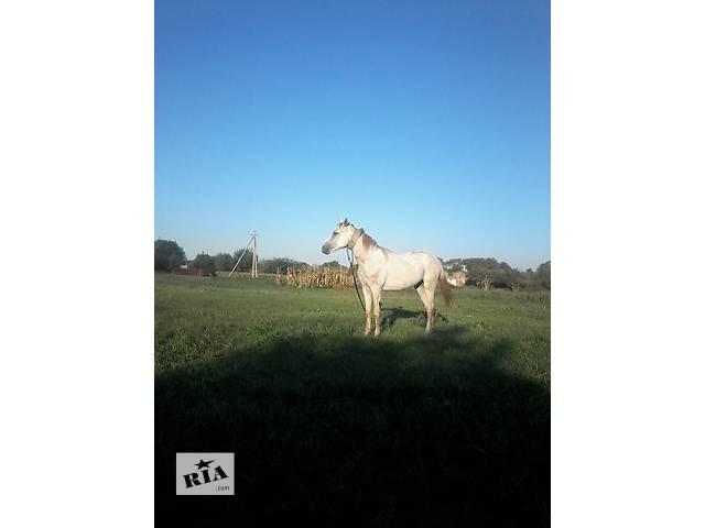 Срочно продам лошадь.- объявление о продаже  в Карловке (Полтавской обл.)