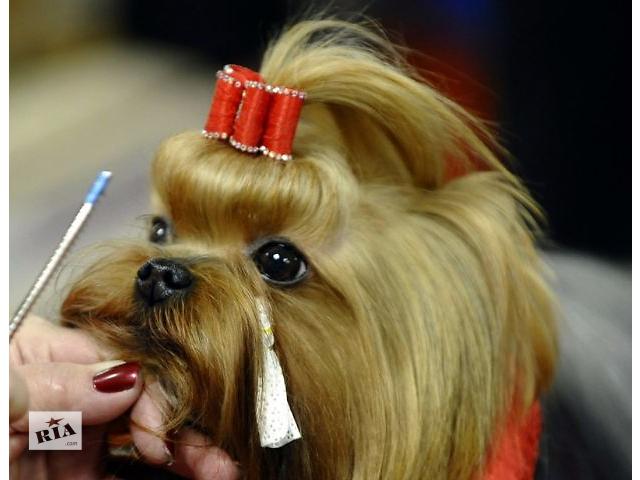 купить бу Стрижка собак всех пород в Днепропетровске в Киеве