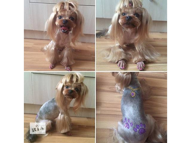 бу Стрижка собак и котов.Снятие зубного камня в Харькове