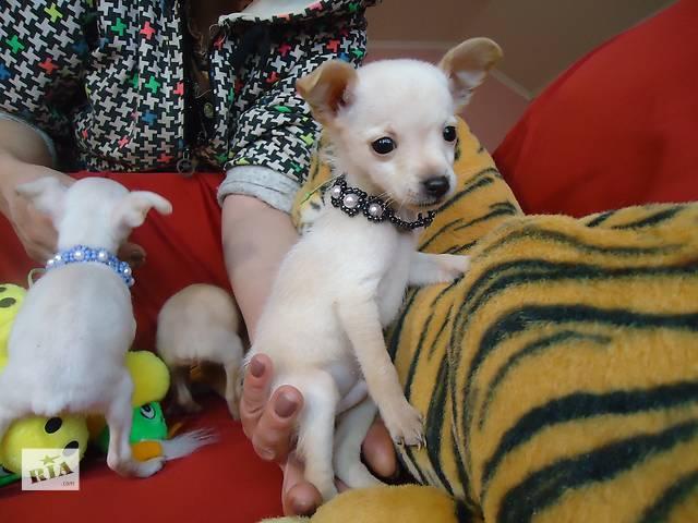 бу Симпатичные щеночки в Одессе