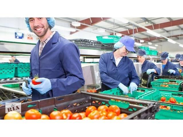 продам Робота для чоловіків, жінок та сімейних пар на фруктово-овочевому складі в Чехії з перспективою бу  в Украине