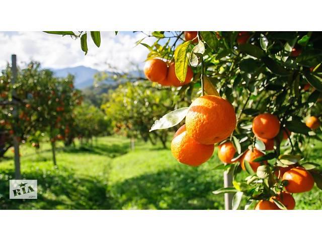 Сбор фруктов.Работа в Португалии