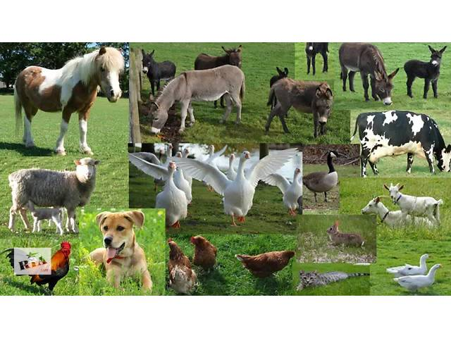 Ветеринар- бесплатные консультации вся Украина, 24 часа,фермерам,частным лицам, на дом и срочно по Ивано-Франковску обл- объявление о продаже   в Украине