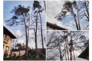 Видалення,зрізання дерев у Львові і області,Послуги арбориста