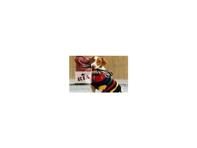 Выгул собак- объявление о продаже  в Львове