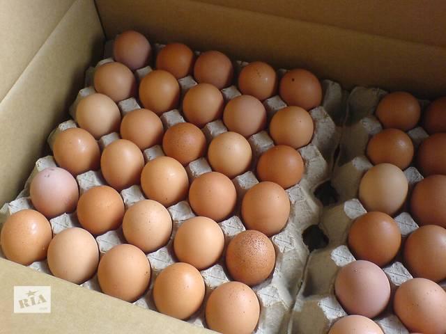 Яйца категории c-1 и с-0- объявление о продаже  в Киеве