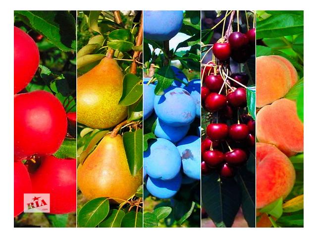 бу Мы выращиваем саженцы  плодово-ягодных культур яблоня груша слива персик черешня крыжовник  ! Большой выбор сортов. в Бахмуте (Артемовск)