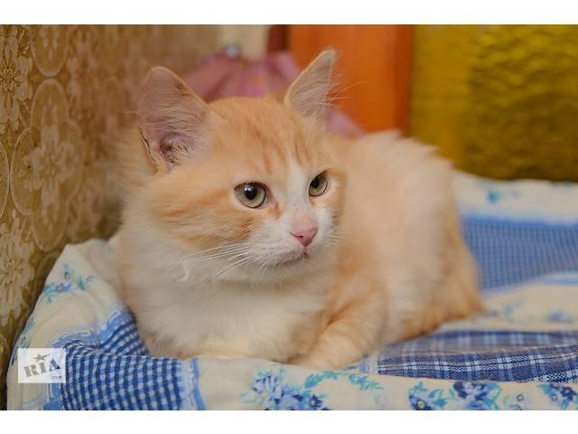 бу Ищет дом котенок Рыжик  в Донецке