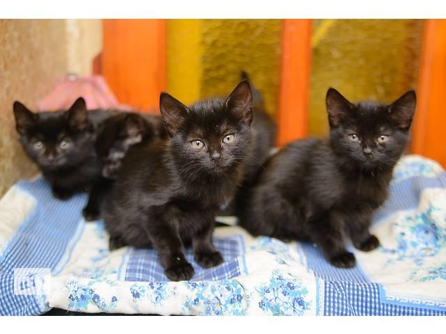 купить бу Ищут дом черные котята  в Донецке