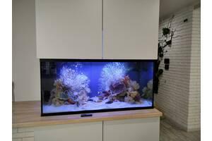 Акваріум ,акваріумні риби