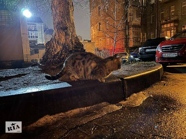 купить бу Арчи, очаровательная леопардесса в Киеве