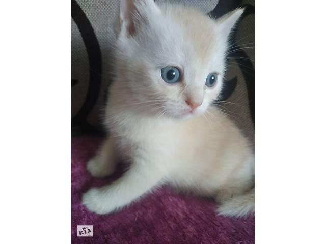 бу Британский котёнок (мальчик)  в Украине