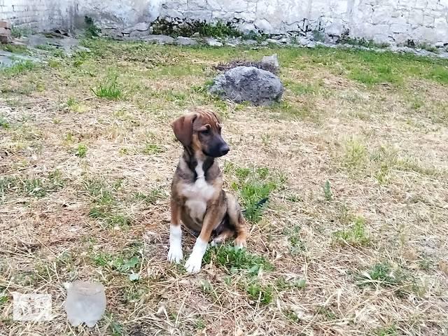 купить бу Замечательные щенки бесплатно!!! в Кропивницком (Кировоград)