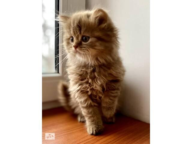 длинношерстный котенок- объявление о продаже  в Харькове