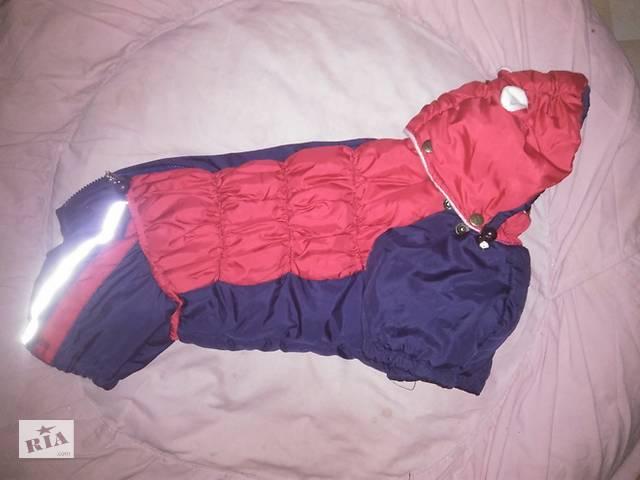 купить бу Комбинезон для собачки-девочки, куртка, костюм в Полтаві