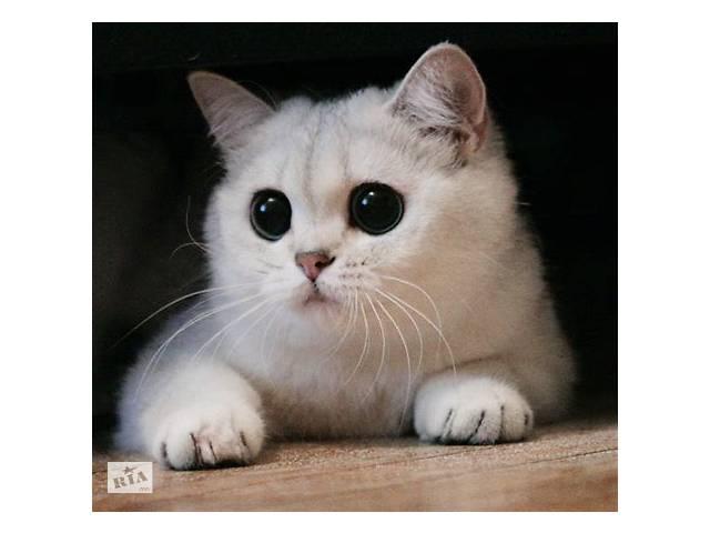 Кошеня- объявление о продаже  в Виннице