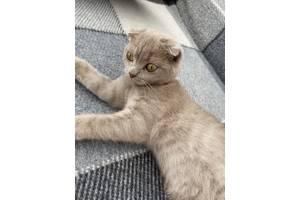 Котенок-мальчик