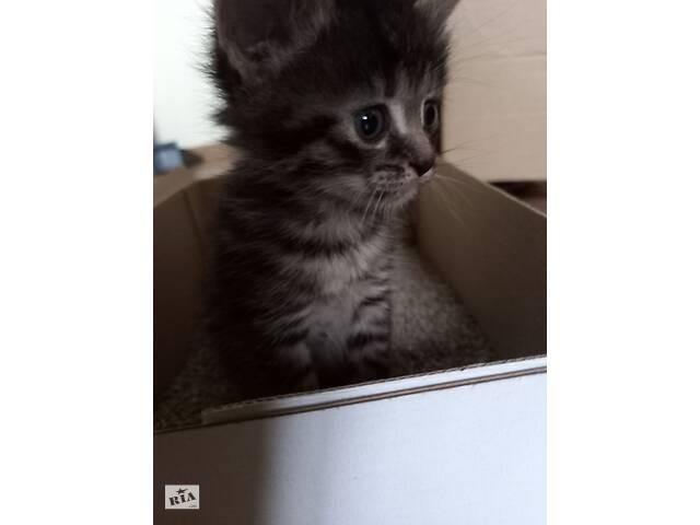 Кошенята 1,5 місяця шукають дім