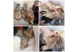 Кошенята в хороші руки 🐈