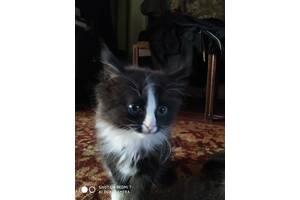 Котёнок пушистый