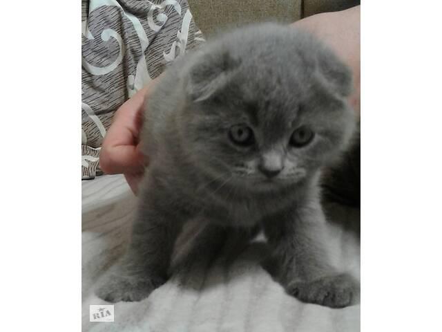 купить бу Котята в Кропивницком (Кировоград)