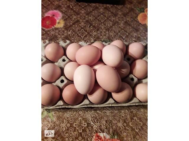 продам Куриное яйцо бу в Коростене