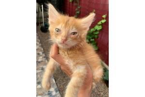 Ласковый рыжий котик ищет дом