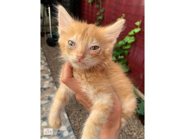 купить бу Ласковый рыжий котик ищет дом в Одессе
