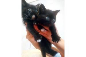 Маленькие комочки счастья ищет преданные любящие руки