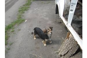 Знайдена собака!!!!