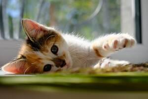 Отдадим котят в ласковые руки. Харьков