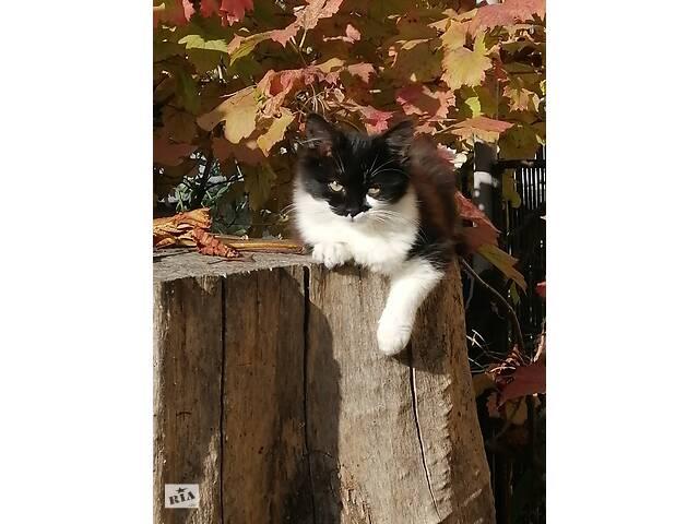 отдам пушистого котенка хорошие руки - объявление о продаже  в Одессе