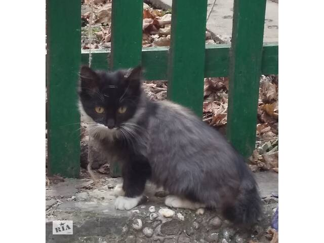 продам отдам пушистого котенка в хорошие руки  бу в Одессе