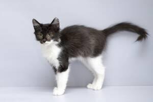 Отдам в хорошие руки котенка девочку Челис.